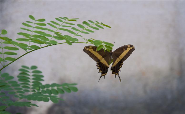 comenzaran-jornadas-a-favor-del-cuidado-del-medio-ambiente
