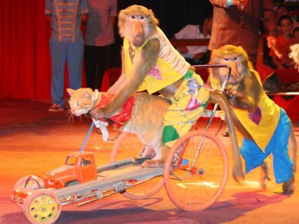 circo-nacional-de-cuba-se-presentara-en-el-teatro-mella