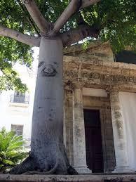 arboles-devocionales-en-cuba-atisbos-sobre-una-arbolaria-mistica-tradicional